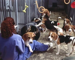 Dog playing in animal research facility. CC UAR.