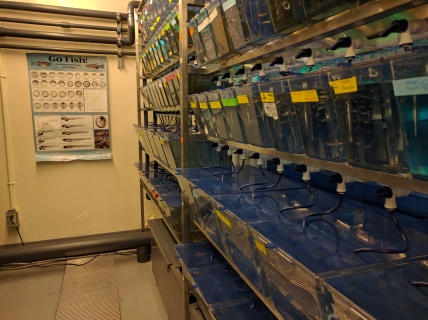 Zebrafish at the University of Ottawa