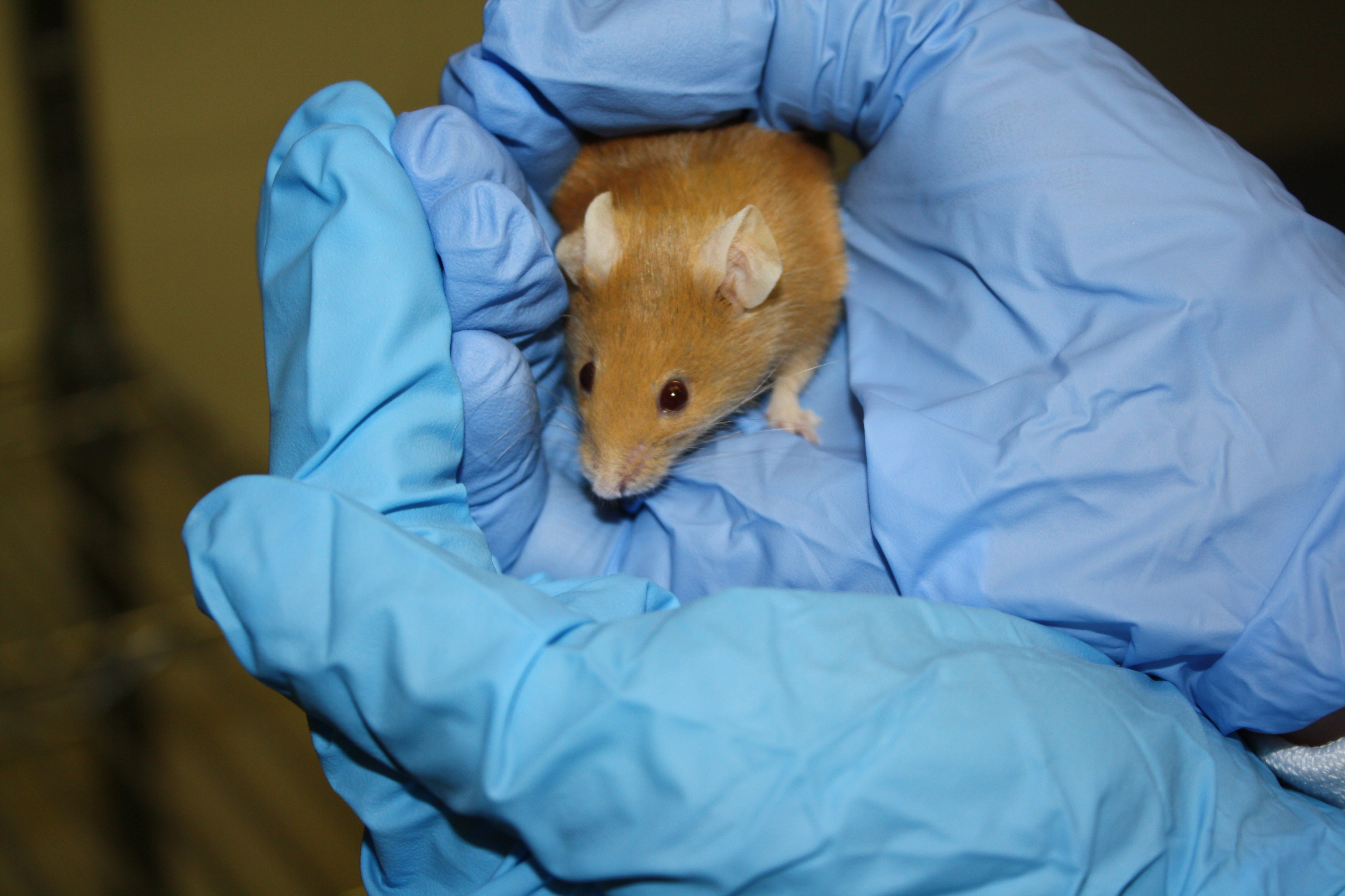 animal testing is crucial in medical research Read this essay on animal testing  as animal research, plays a crucial role in  favour of animal testing is that the result of medical experiments are.