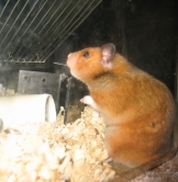 animal testing, animal research, vivisection, animal experiment