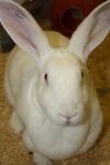 animal testing, animal research, vivisection, animal experiment