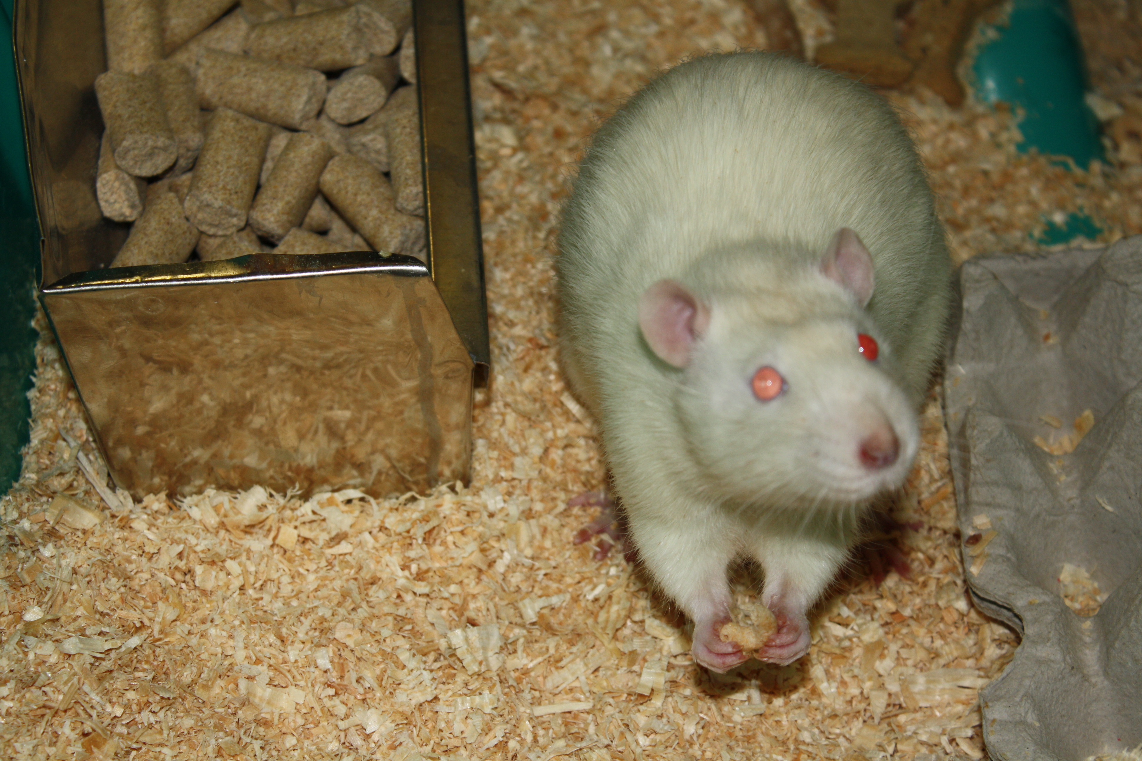 guest post the importance of animals in neuroscience research