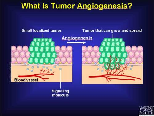 Image kindly provided by NCI - www.cancer.gov