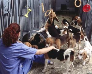 Laboratory Dogs