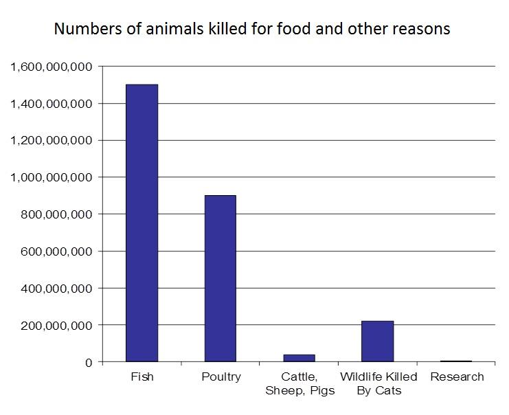 Against Animal Testing Essay