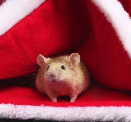 Christmas Mouse.Merry Christmas Mouse Speaking Of Research