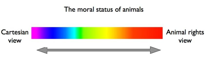 animal welfare model of animal research