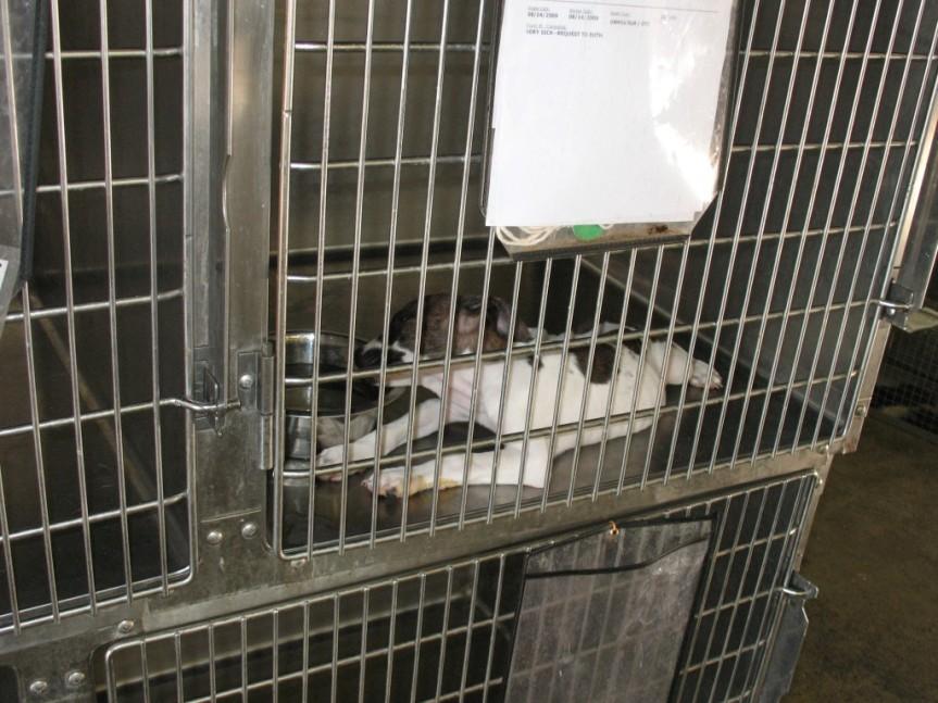PETA kills puppies with parovirus in shelter