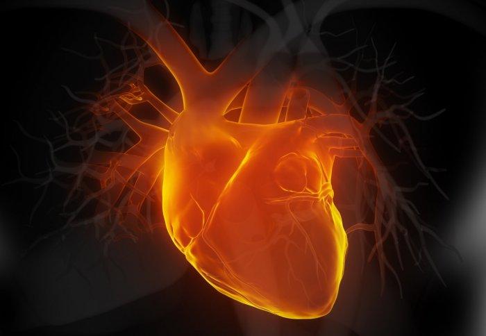 Heart_ICL