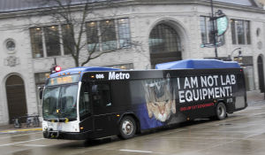 Metro bus displaying PETA ad. Image: Wisconsin State Journal.