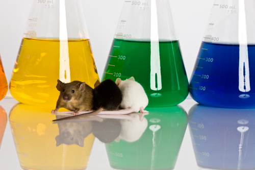 Laboratory Mice animal testing