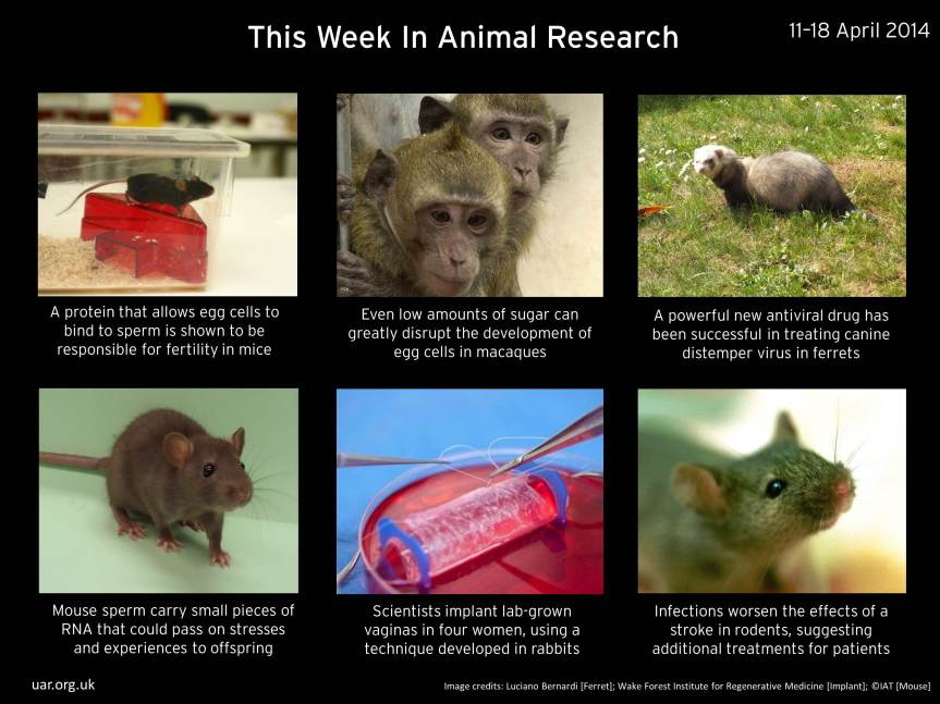 The Week in Animal Research