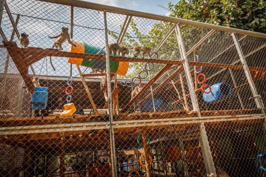 macaque monkey animal testing israel
