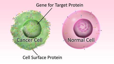 Unique cell surface proteins on a cancer cell, which can be detected using antibodies.
