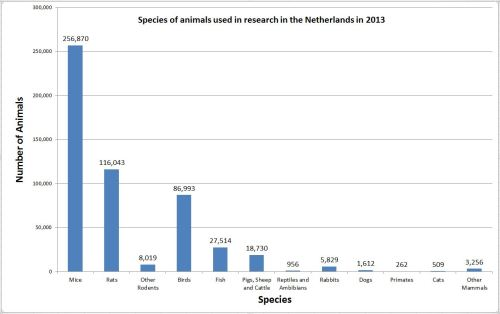 animal research holland netherlands dutch statistics