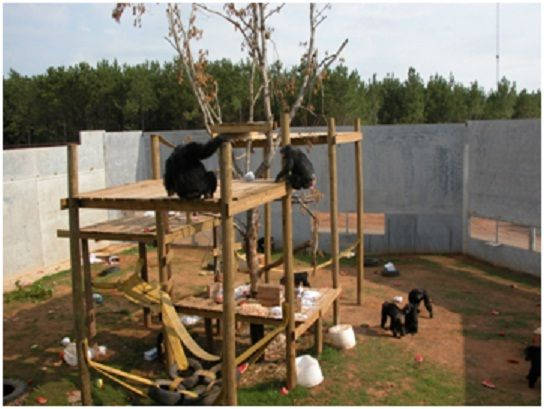 chimp haven 2