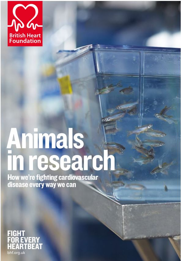 Bhf Animal Research Paper - image 7