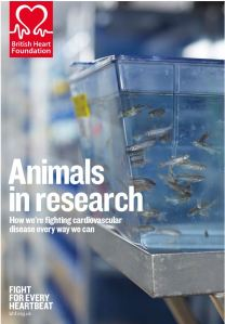 BHF's leaflet on animal research