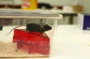 mouse-sitting-on-red-mouse-house