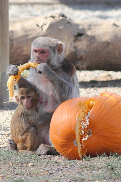 Image from Californian National Primate Research Center