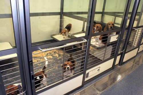 Laboratory housed dogs in home pens, AstraZeneca facility. Credit: Laura Hall / Refining Dog Care