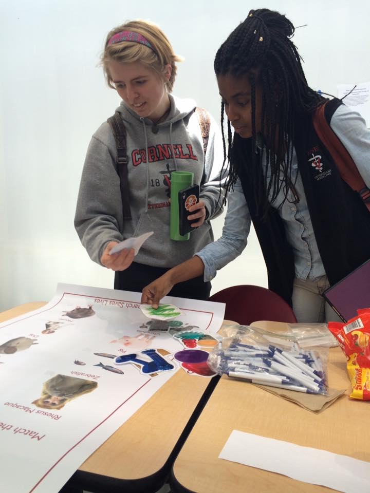 The Enrichment Matching Game was used to teach participants about the various toys and enrichment items that are provided to animals in research in an effort to elicit normal species-specific behavior. Here, students at Cornell University test their knowledge.