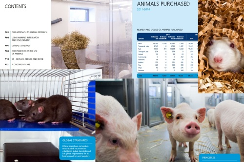 Montage of images from the Novo Nordisk brochure on its animal research. Click to Enlarge
