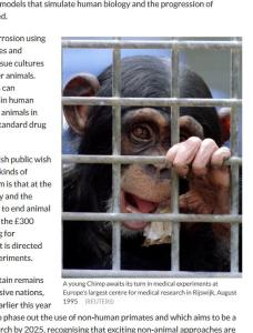 Chimpanzee in IB article
