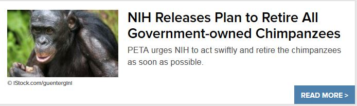 PETA on nih chimp announce 08.11.16