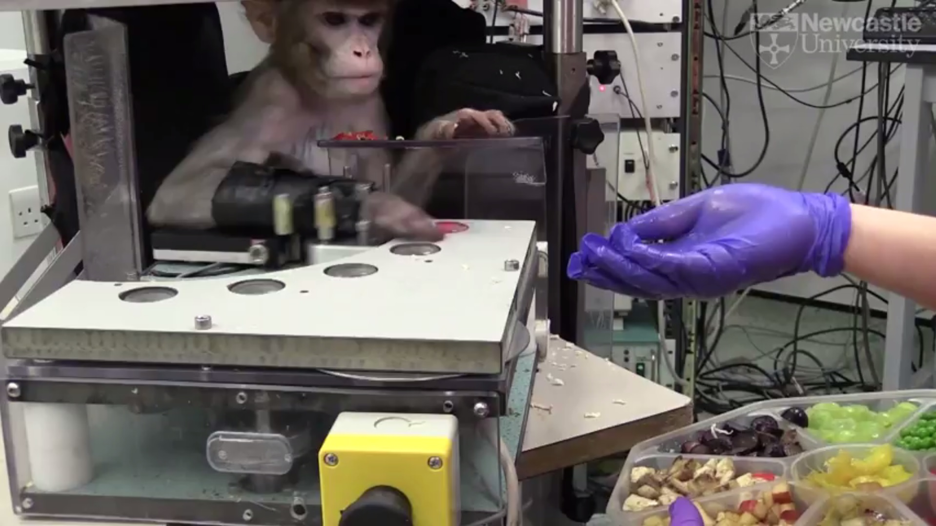 Device to help stroke patients to recover moves from primates to