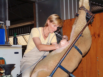 Credit: Livestock Breeding Services - http://www.livestockbreedingservices.com.au/images/servicesai.jpg