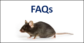 FAQs on Animal Testing